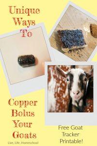 copper bolus for goats