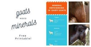mineral deficiencies in goats, copper bolus