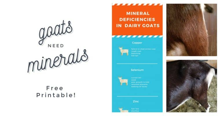 Symptoms of Mineral Deficiencies In Your Goats
