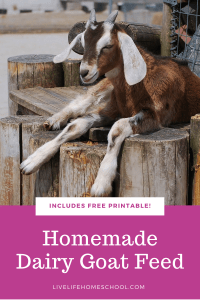 homemade dairy goat feed