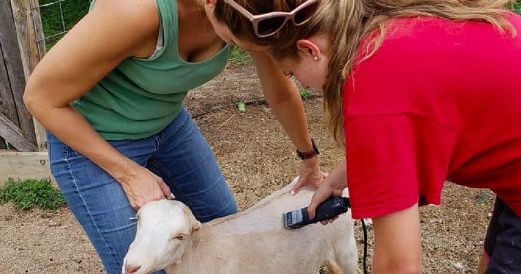 How Homesteading Has Transformed Me